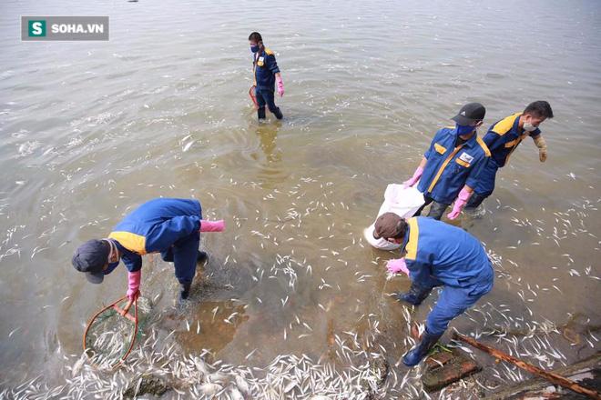 [ẢNH] Cảnh vớt cá chết nổi trắng chưa từng có ở Hồ Tây - Ảnh 10.