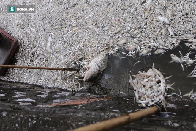 [ẢNH] Cảnh vớt cá chết nổi trắng chưa từng có ở Hồ Tây - Ảnh 11.