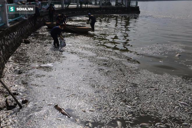[ẢNH] Cảnh vớt cá chết nổi trắng chưa từng có ở Hồ Tây - Ảnh 13.
