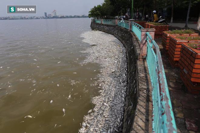 [ẢNH] Cảnh vớt cá chết nổi trắng chưa từng có ở Hồ Tây - Ảnh 14.
