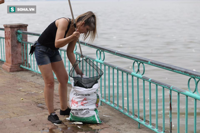 [ẢNH] Cảnh vớt cá chết nổi trắng chưa từng có ở Hồ Tây - Ảnh 15.