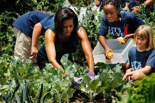 Loại cây được ví là sâm nam của VN có trong vườn nhà Obama - Ảnh 7.