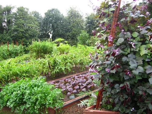 Loại cây được ví là sâm nam của VN có trong vườn nhà Obama - Ảnh 12.
