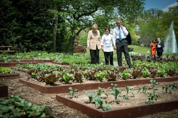 Loại cây được ví là sâm nam của VN có trong vườn nhà Obama - Ảnh 2.