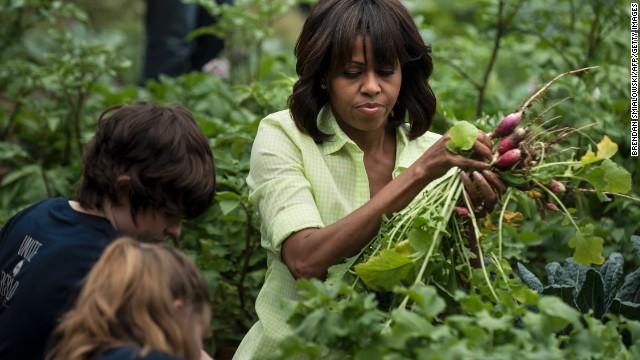 Loại cây được ví là sâm nam của VN có trong vườn nhà Obama - Ảnh 8.