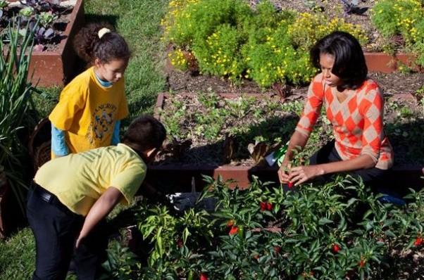 Loại cây được ví là sâm nam của VN có trong vườn nhà Obama - Ảnh 6.