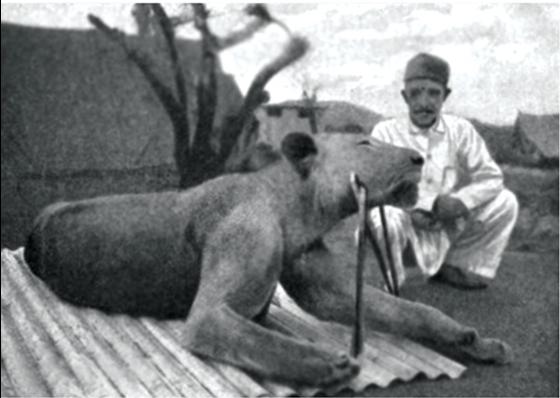 Cặp quái thú ăn thịt người đáng sợ nhất lịch sử thế giới - Ảnh 4.