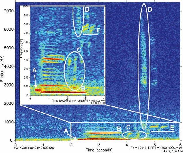 Cuối cùng, khoa học đã giải mã được âm thanh ma quái ở vực thẳm sâu nhất Trái Đất - Ảnh 3.