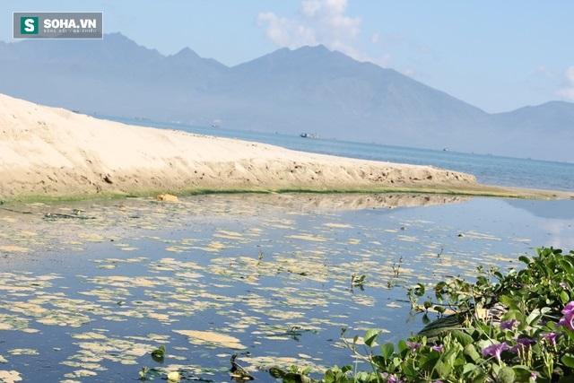 Biển Đà Nẵng đang bị đầu độc như thế nào? - Ảnh 2.