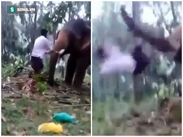 Clip: Bắt chước cảnh quay hoành tráng trong phim, nam thanh niên bị voi húc nhập viện - Ảnh 2.