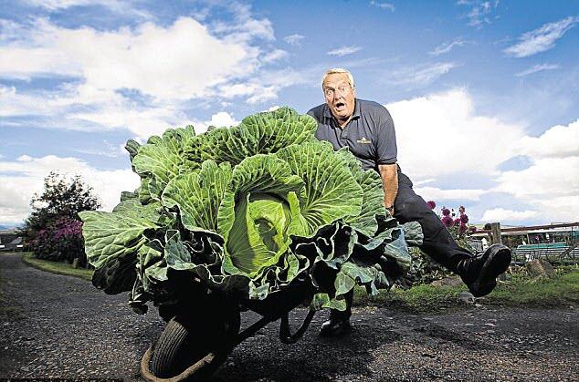 24h qua ảnh: Nông dân trồng được bắp cải khổng lồ gấp 50 lần bình thường - Ảnh 3.