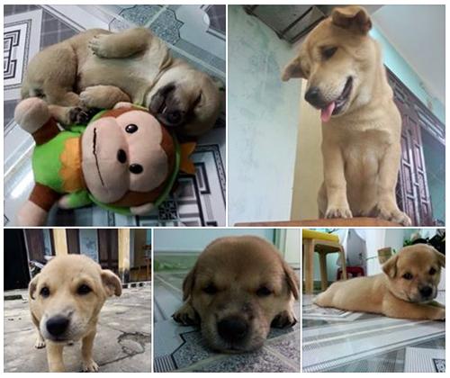 Sự trở về của chú chó và những vết thương trên mình gây ám ảnh dân mạng Việt  - Ảnh 2.