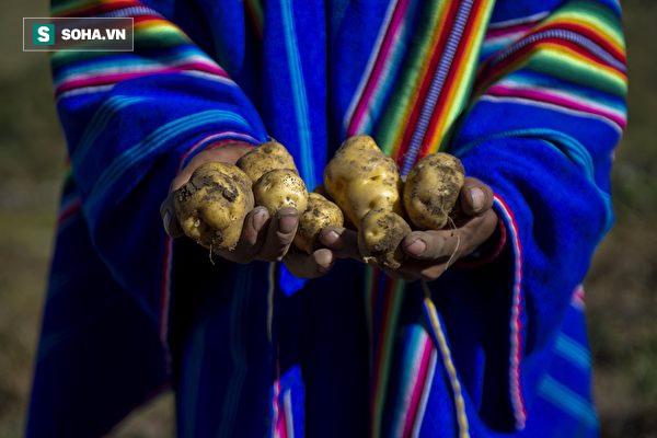 Gửi những người hay thù ghét, oán hận: Bài học thấm thía từ những củ khoai tây thối - Ảnh 1.
