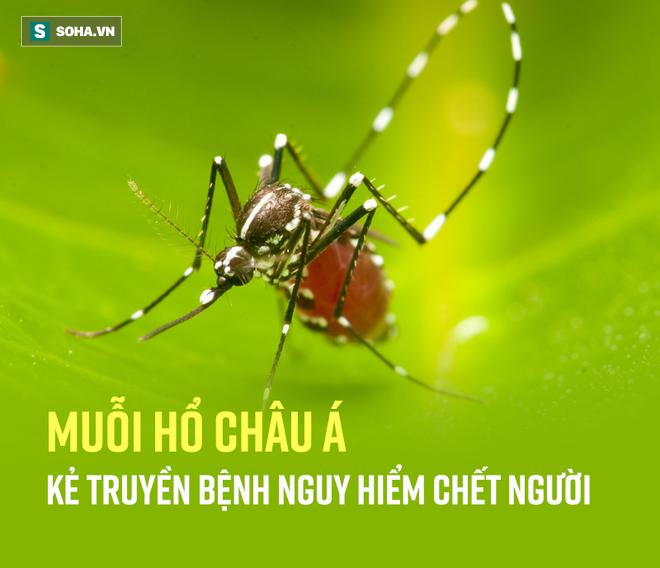 Bắt thóp tập tính muỗi truyền sốt xuất huyết: Lo trong nhà bạn, không cần lo hàng xóm! - Ảnh 3.
