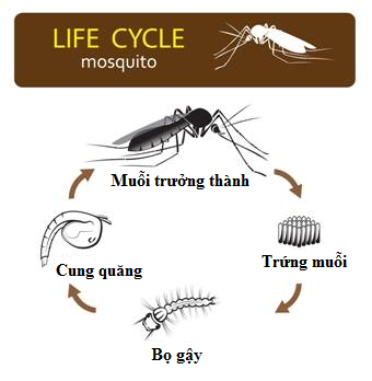 Bắt thóp tập tính muỗi truyền sốt xuất huyết: Lo trong nhà bạn, không cần lo hàng xóm! - Ảnh 5.