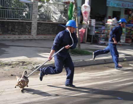 Khi biệt đội săn bắt chó thả rông đối đầu với chủ nuôi: Những tình huống bi hài không ngờ - Ảnh 4.
