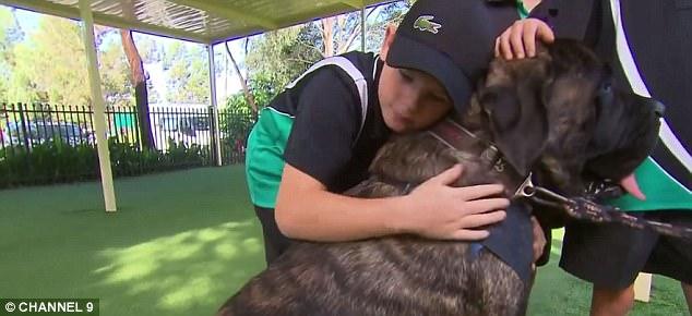 Chú chó nặng 113kg được cấp chứng chỉ hành nghề trị liệu - Ảnh 2.