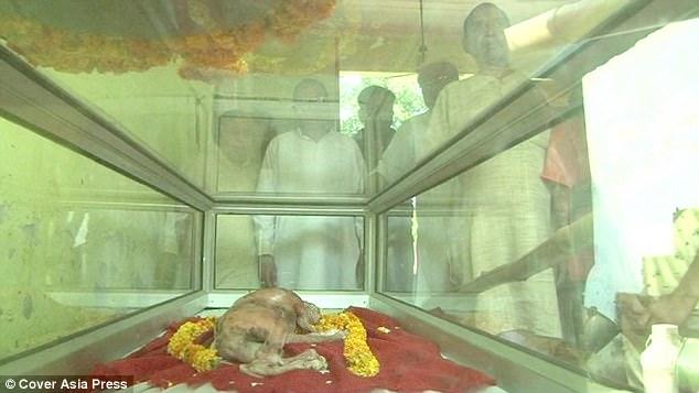 Con bê có phần đầu giống đầu người khiến người dân xôn xao 3