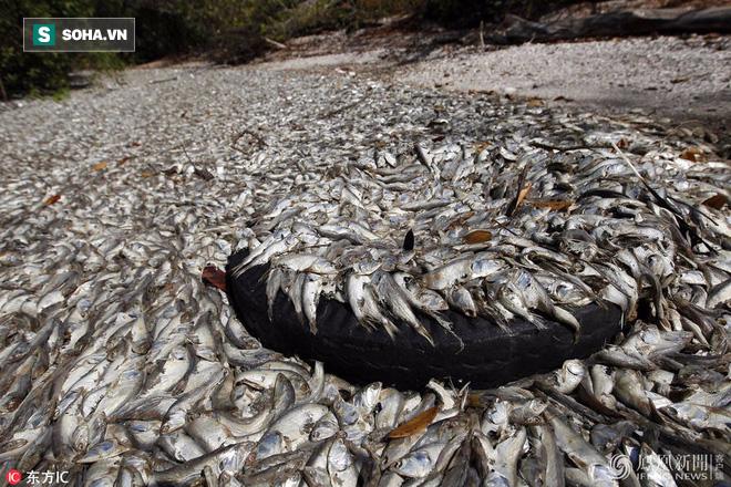 Chùm ảnh: Hiện tượng lạ khiến 1 loài cá bất ngờ chết hàng loạt tại 4 quốc gia - Ảnh 1.