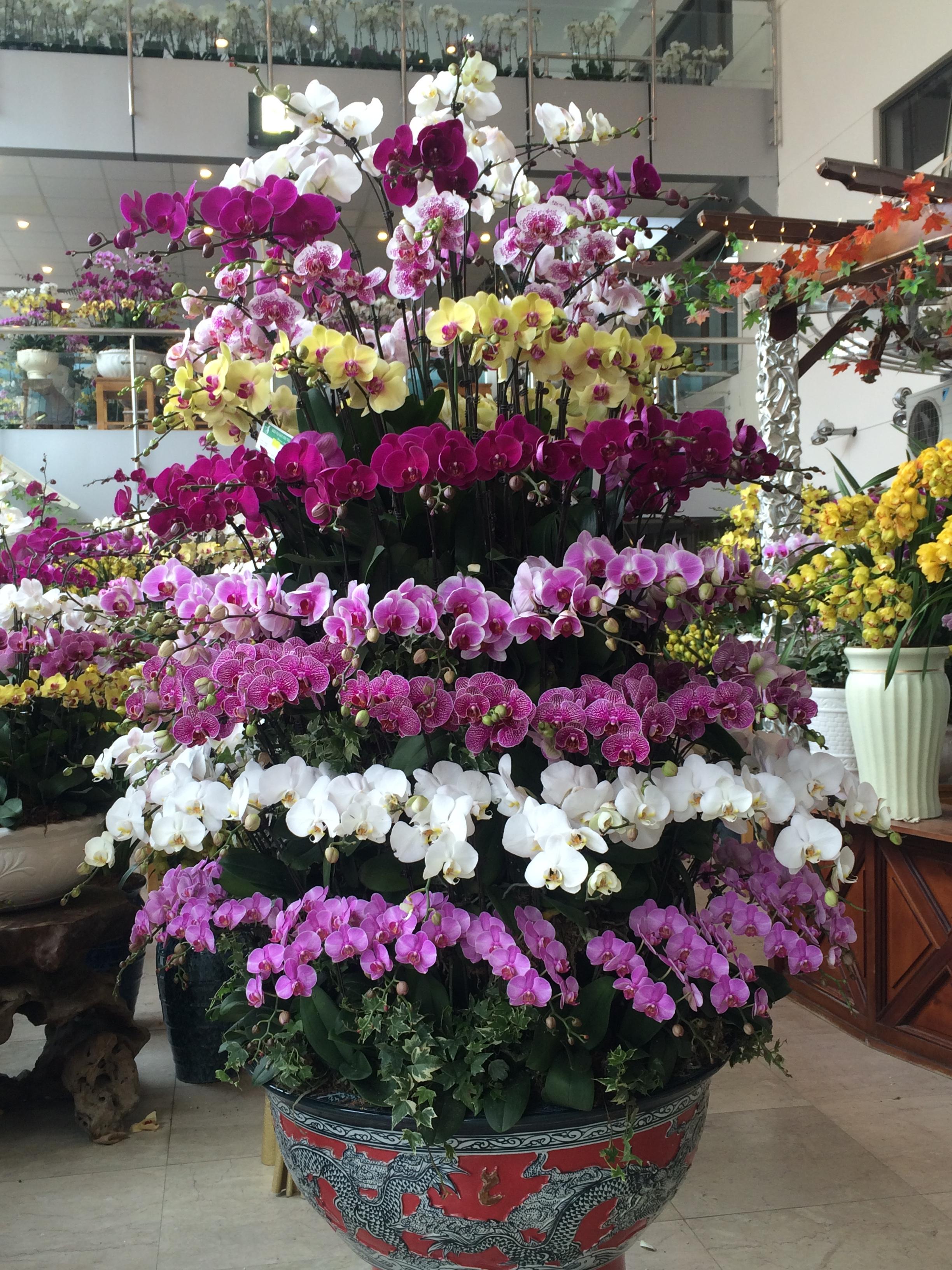 Shop hoa tươi giá rẻ nhất - 3