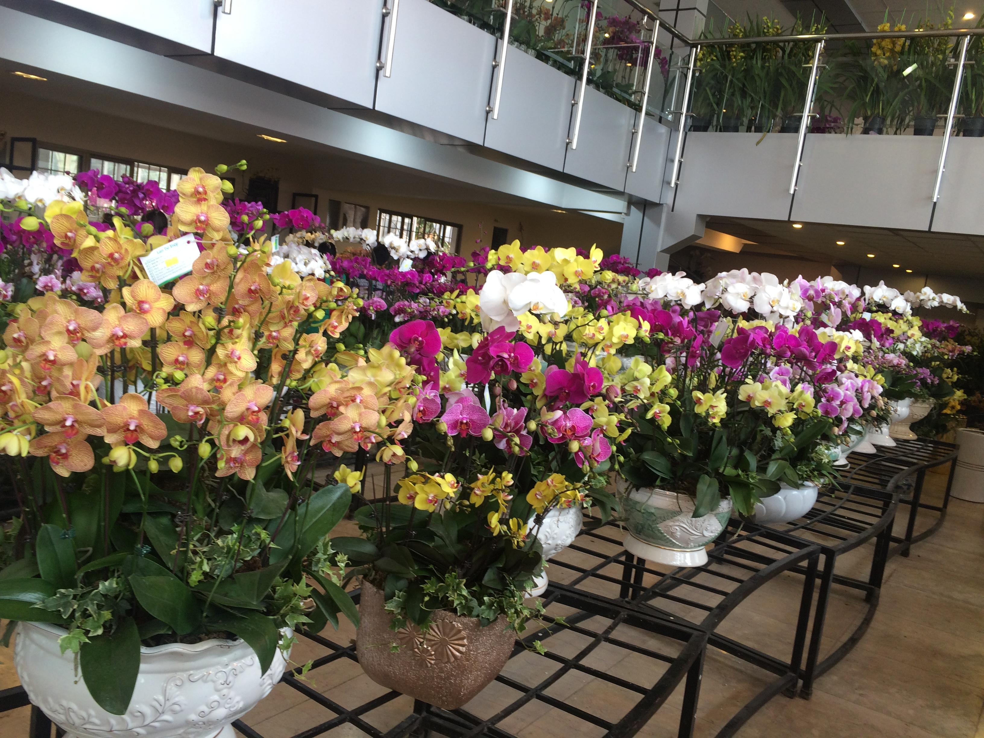 Shop hoa tươi giá rẻ nhất