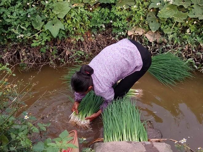 Rau sống tưới nước thải tím ngắt, thịt lợn vào báo cáo của World Bank - Ảnh 3.