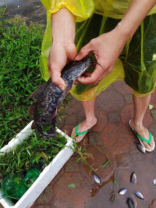Người dân đổ xô đi bắt cá sau mưa lớn ở Hà Nội - Ảnh 5.