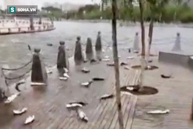 Chuyện lạ: Hàng trăm con cá nhảy lên bờ tự sát và nguyên nhân bất ngờ hé mở - ảnh 1