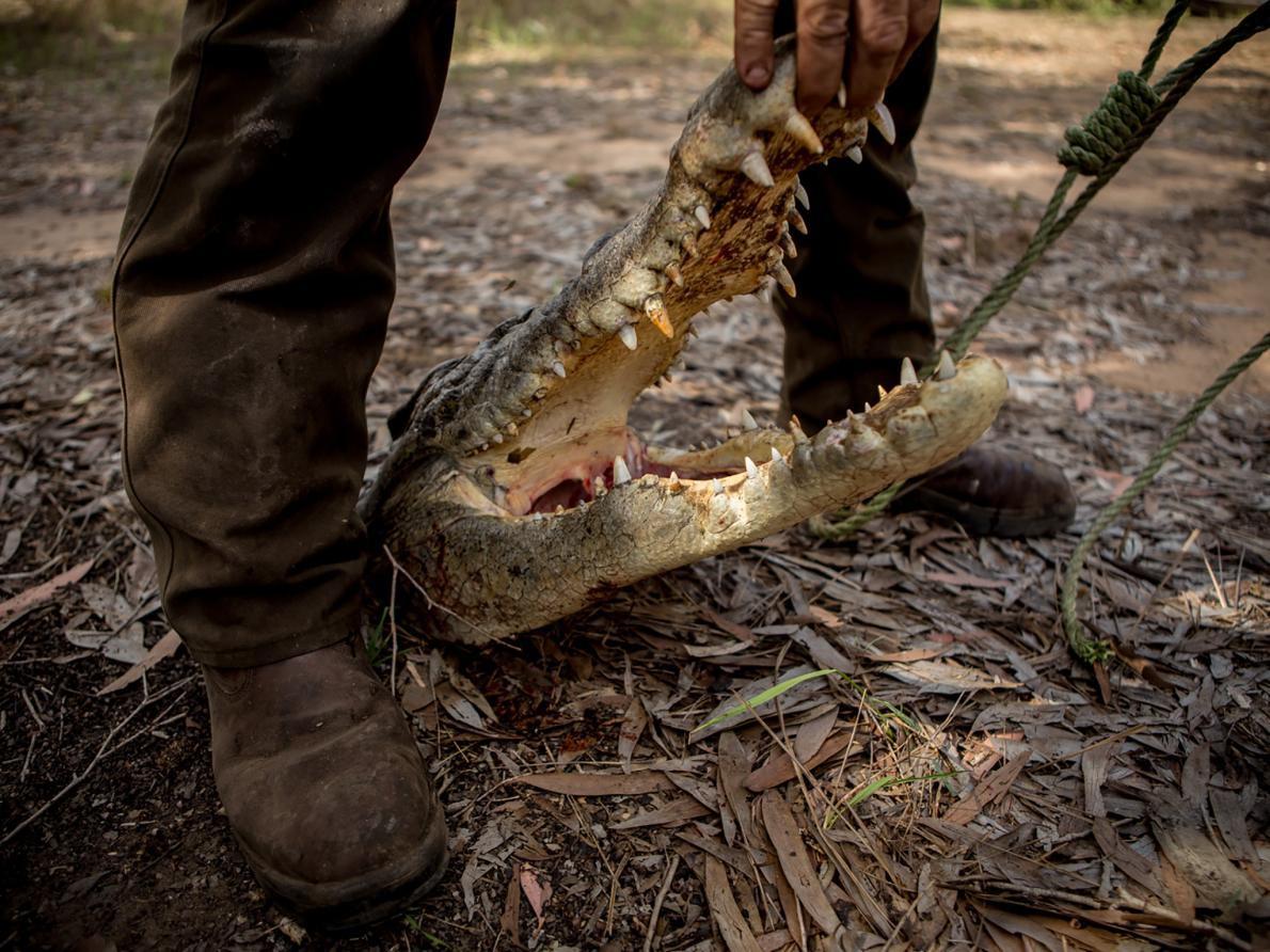 Săn cá sấu khổng lồ trên con thuyền vỏn vẹn dài 4m: Khi cuộc chiến thực sự bắt đầu! - Ảnh 2.
