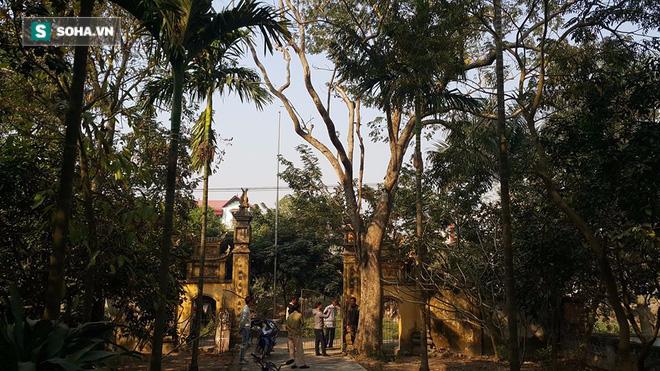 Hình ảnh chặt hạ cây sưa 200 năm tuổi giá 26 tỷ đồng ở Bắc Ninh