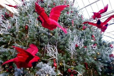 Cây thông Noel thật cao 5 mét được cho ngủ đông đưa về Việt Nam - Ảnh 3.