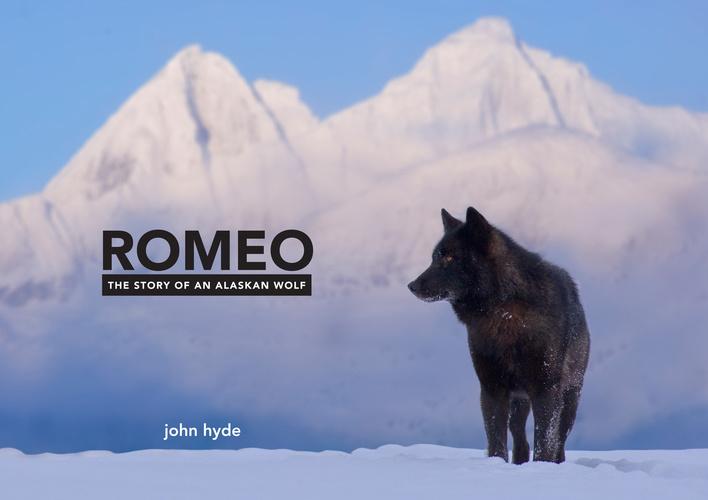 Romeo vui đùa cùng các chú chó nhà Nick Jans trên sông băng Mendenhall Glacier (Alaska, Mỹ). Video: Youtube.