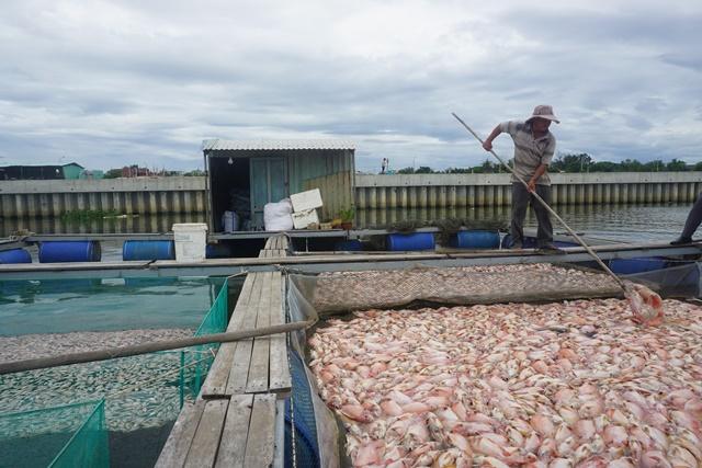 Gần 100 tấn cá nuôi chết trắng sông Cổ Cò, dân không kịp trở tay - Ảnh 1.