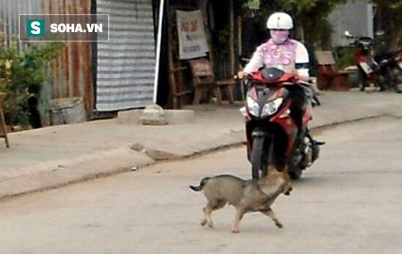 Clip: Thót tim khoảnh khắc trâu lao ra đường, húc ngã người đi xe máy - Ảnh 2.
