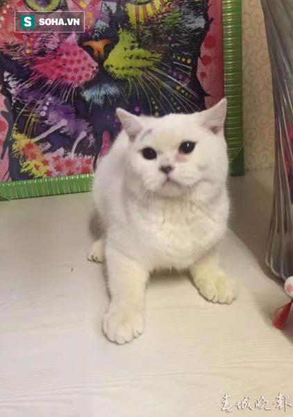 Chú mèo đáng thương bị lột da, vứt trước cửa hàng thú cưng vì lý do không thể chấp nhận - Ảnh 1.
