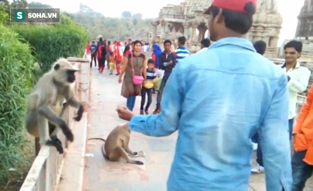 Clip nam du khách thẳng tay tát vào mặt chú khỉ đáng thương gây phẫn nộ - Ảnh 2.