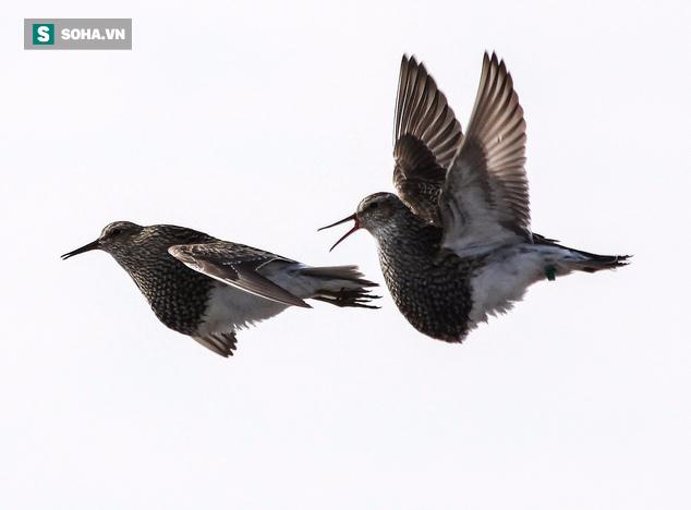 Khoa học tuyên bố: Đây mới chính là loài chim điên tình nhất thế giới - Ảnh 1.