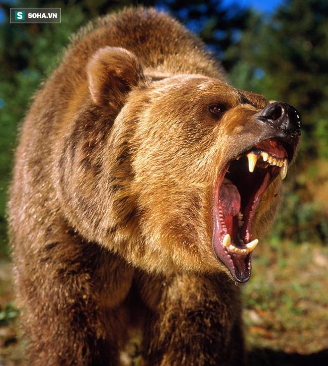 Bị cơn đói hành hạ, gấu xám liều lĩnh độc chiến 4 con sói để cướp mồi - Ảnh 1.