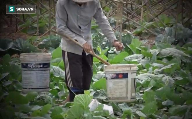 Video: Cận cảnh rau sạch tưới nước bẩn tại Hà Nội - ảnh 2