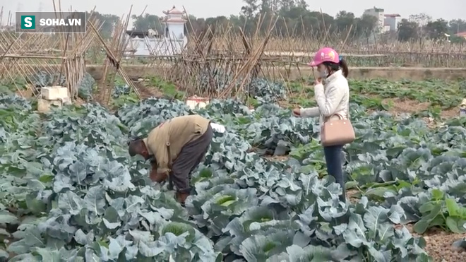 Video: Cận cảnh rau sạch tưới nước bẩn tại Hà Nội - ảnh 6