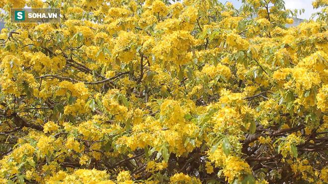 Cận cảnh cây mai được trả giá 2 tỷ ở Đồng Nai - Ảnh 4.