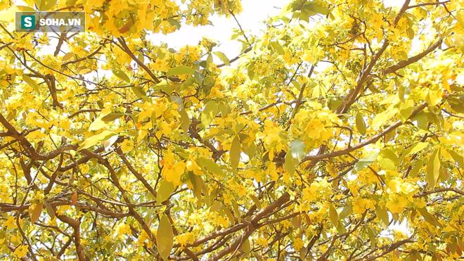 Cận cảnh cây mai được trả giá 2 tỷ ở Đồng Nai - Ảnh 12.