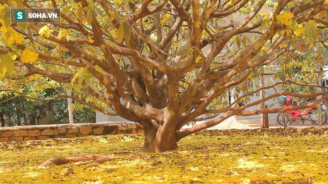 Cận cảnh cây mai được trả giá 2 tỷ ở Đồng Nai - Ảnh 5.