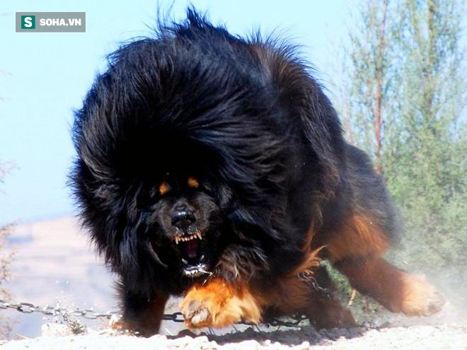 Bả chết sư tử cùng chó sói, đây chính là loài chó nguy hiểm và hung hãn nhất hành tinh - Ảnh 1.