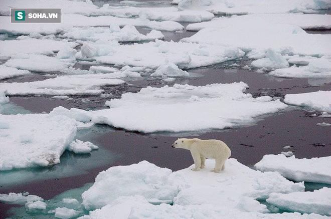 Đầu tư 500 tỷ USD, các nhà khoa học hy vọng có thể cứu rỗi thảm họa băng tan ở Bắc Cực - Ảnh 1.