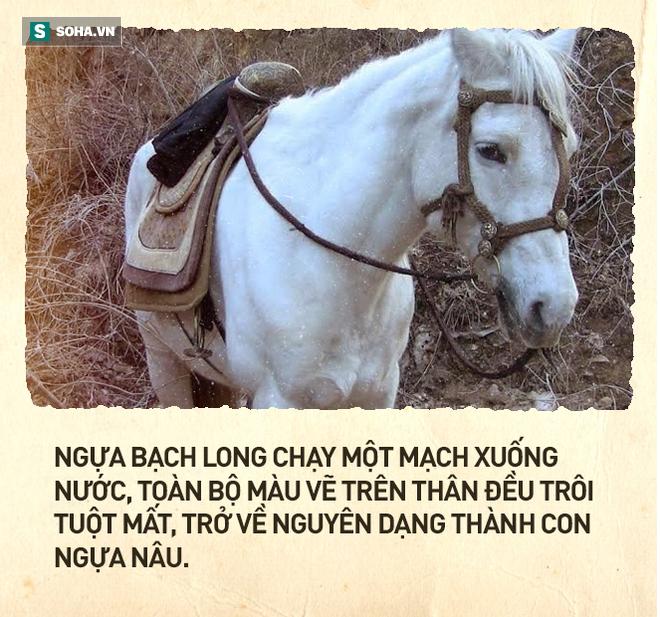 Cái kết thê thảm của chú ngựa Bạch Long Mã phim Tây Du Ký bản 1986 (P2) - Ảnh 2.