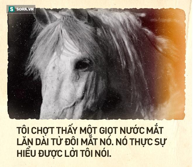 Cái kết thê thảm của chú ngựa Bạch Long Mã phim Tây Du Ký bản 1986 (P2) - Ảnh 4.