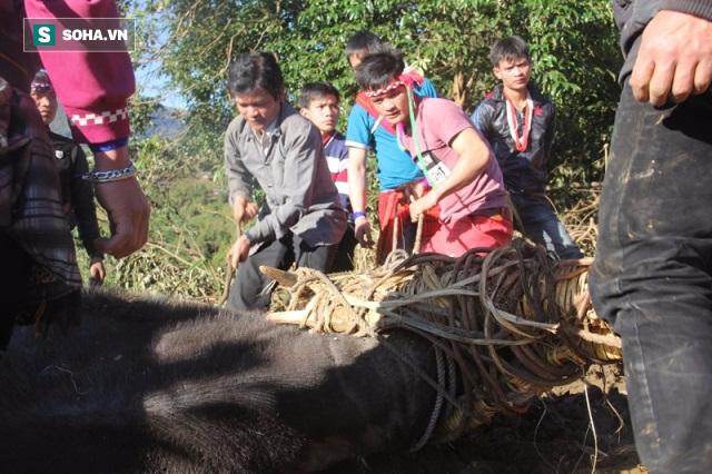 Chính quyền Quảng Nam nói khó cấm tục đâm trâu - Ảnh 2.