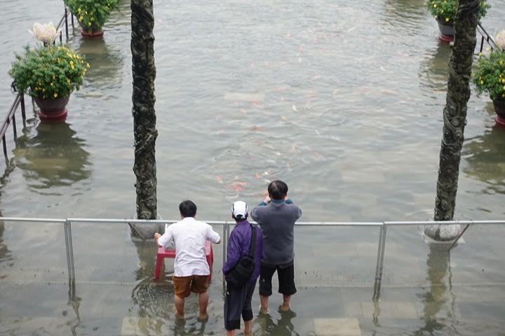 Độc Lạ: Cảnh tượng khó gặp: Cá chép bơi tung tăng ngay trước cửa Đại Nội Huế