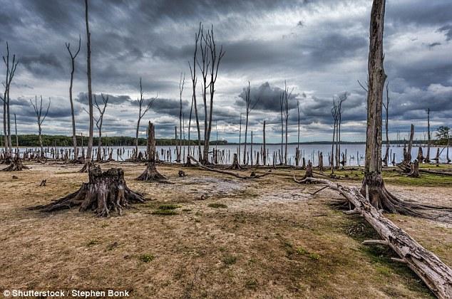 Giới khoa học tuyên bố: Đã tìm ra thủ phạm gây biến đổi khí hậu trên Trái Đất - Ảnh 2.